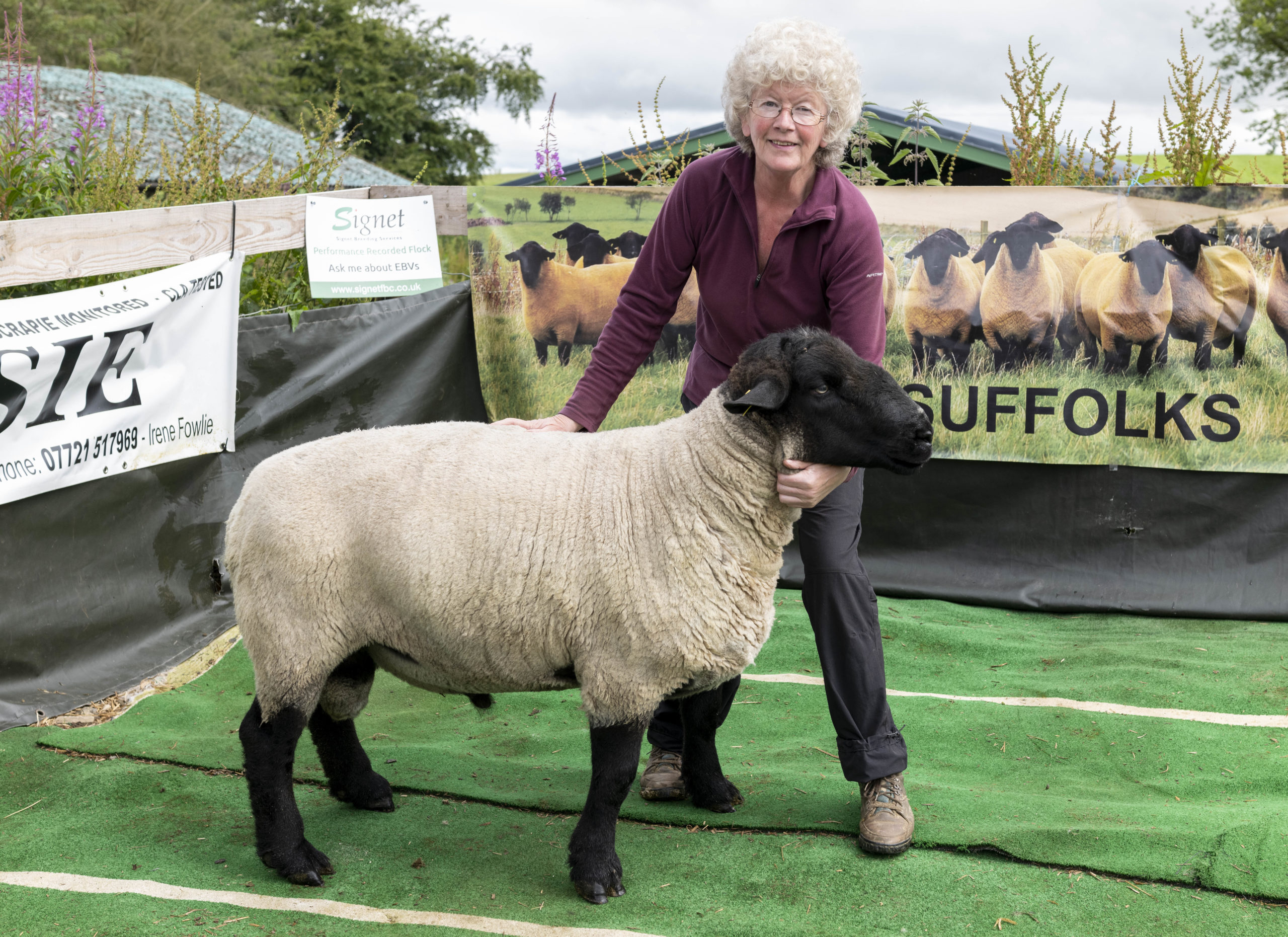 Irene Fowlie with one of the Essie Suffolk sheep she sends to Russia