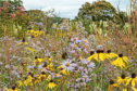 Left to its own devices, a wildflower garden can fill itself with beautiful blooms