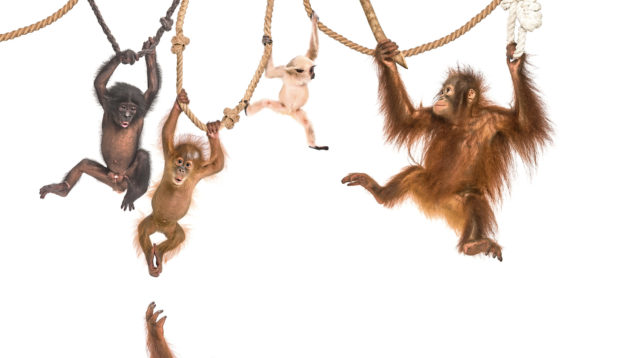 Experts say our lockdown community spirit is a little like monkeys' behaviour