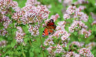 While butterflies may be still be feeding on oregano or hummingbird fuchsias  they won't be around for much longer as the season is about to change