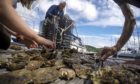 Oyster project volunteers  get to work at Ardfern Yacht Centre