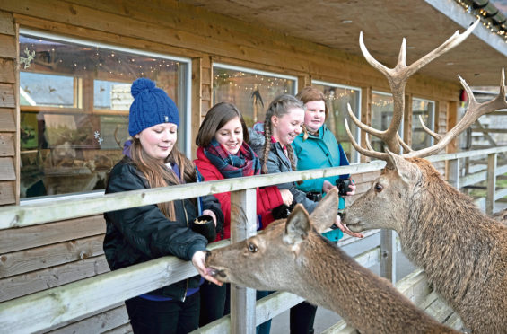 VisitScotland hired four pupils from Lornshill Academy, Clackmannanshire as quality tourism advisors for the day to assess Highland Safaris in Perthshire. Pictured feeding the deer from left, Damien McAleese (13), Imogen MacLeod (13), Lucy Hensman (13) and Eryn Marshall (13).