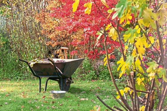 Working amid the damp and the fallen leaves, the autumn brings a cascade of colour to trees and shrubs