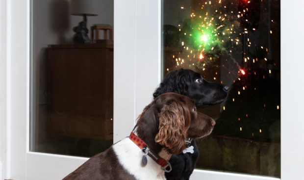 Dogs on bonfire night