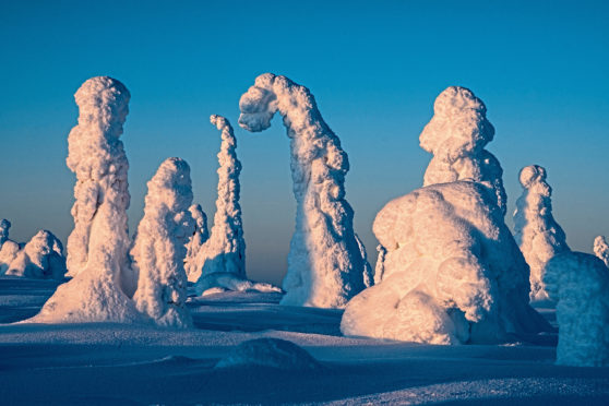 Tykky covers the trees in Finland's Riisitunturi National Park