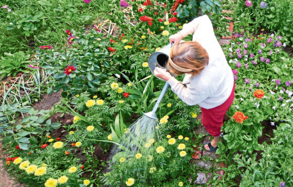 Focusing on plants has provided much-needed distraction from the challenges  of lockdown for experienced gardeners