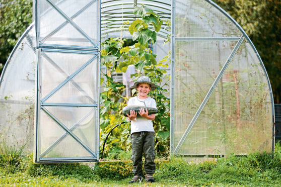 Roll on March, when Agnes's super-sized greenhouse is delivered and  she'll be happily locked down growing delights such as Green Zebras