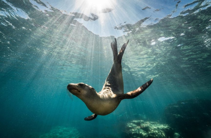 Seals are suffering disturbance during the pupping season as more people were walking on beaches and they are very wary of dogs