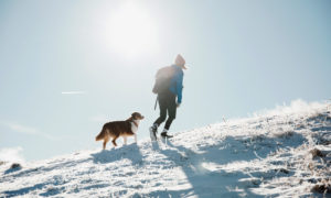 A mountain trek with a canine companion can be a rewarding day out