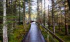 A footpath through Abriachan woods near Inverness