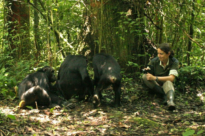 Catherine Hobaiter studying chimps