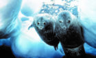 Doug Allan's stunning photo of a Weddell seal and her pup under the Antarctic ice