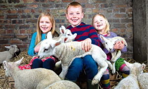9/4/19 . The Sunday Post, by Andrew Cawley. 