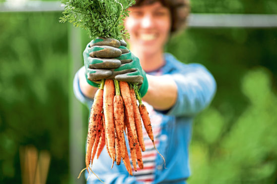 You can grow carrots in a container if your garden soil is stony or unsuitable for veg