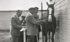 A horse is prepped before the Royal Highland Show, Dundee, June of 1957