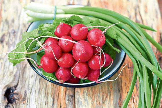 Radishes and pulses should be planted outdoors now