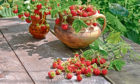 Strawberries as well as being delicious, can be decorative, too