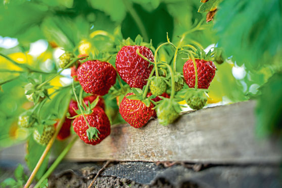 If your garden is not blessed with sun, there are some varieties that will still flourish