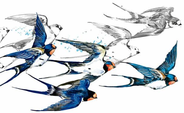 The arrival of swallows heralds change of season  Illustration Faenkova Elena