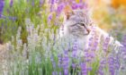 Many cats simply can't resist the aroma of the plant