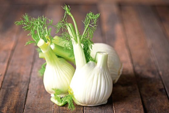 Fresh fennel is easy to grow in gardens.