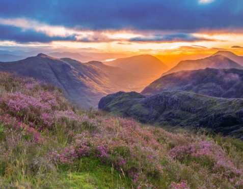 As the sun rises across Glencoe, the vibrant colours of heather and its nectar provides a valuable habitat for insects and animals