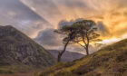 Adrian Houston's favourite tree is the Scots Pine which reminds him of his childhood holidays in Glen Coe