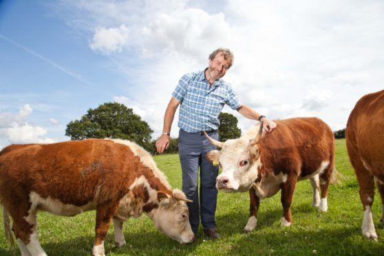 Farmer and sound therapist Malcolm Gough with his miniature cattle