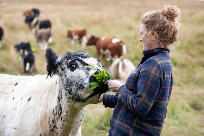 Nikki Yoxall with grazing cattle