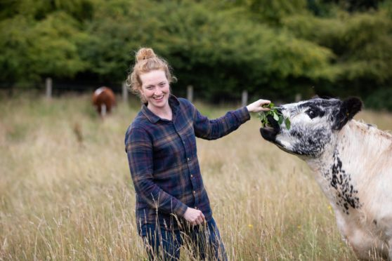 Farmer Nikki Yoxall with one of her agroforestry cattle on the Howemill farm near Huntly, Aberdeenshire