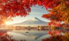 Autumnal shades with Mount Fuji, Japan in the distance