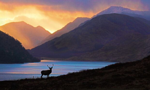 Chasing The Red Deer Through The Seasons - by Neil McIntyre.