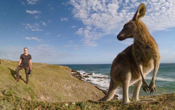 Animals With Cameras cameraman Gordon Buchanan gets up close with Eastern Grey Kangaroos  in Australia
