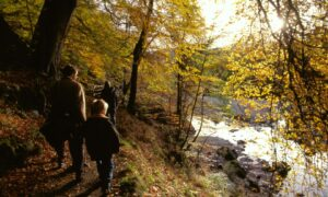 Autumn shows her colours on this walk by the River Garry close to                             Killiecrankie in Pertshire's Big Tree Country