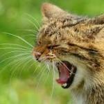 Statoil given green light for wildcat