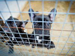 (Beth Walsh/Dogs Trust/PA)