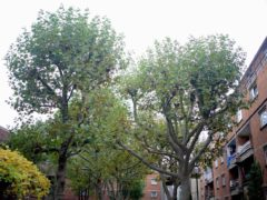 The trees at Wornington Green Estate in Kensington (Constantine Gras/PA)
