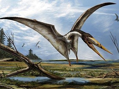 The North African Alanqa, which expetrs say looks similar to the newly-discovered species of pterosaur (Davide Bonadonna/PA)