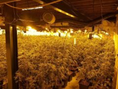 Dozens of plants crammed into a room under bright lights (Sussex Police/PA)