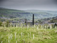 Government announces £3.9 million in funding to drive tree-planting projects (Jill Jennings/WTML)