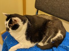 Paisley the cat (Cats Protection)