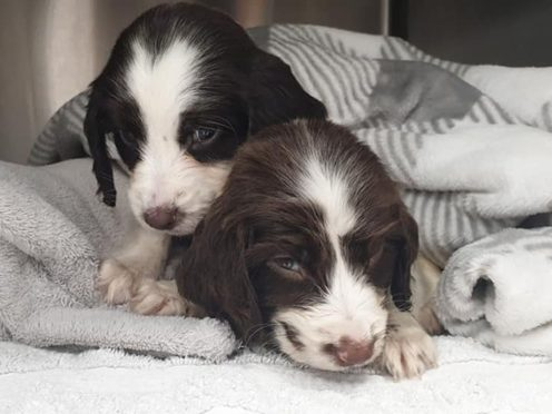 The campaign is calling for stronger regulations around puppy farming (RSPCA/PA)