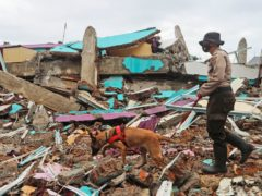 A police officer leads a sniffer dog during a search for victims in the ruins of a building in Mamuju, West Sulawesi, flattened by the earthquake (Joshua Marunduh/AP)