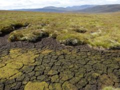 Dried out peat at a Peatland Action site at North Gairn on the Invercauld Estate in the Cairngorms National Park (Lorne Gill/SNH)