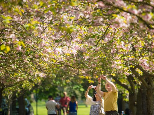 The first blossom circle to be created will be at the Queen Elizabeth Olympic Park in east London (Dominic Lipinski/PA)