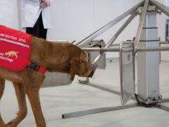 Midas the dog sniffs urine samples to detect prostate cancer (Medical Detection Dogs/PA)