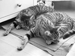 Cats Chas and Dave have been reunited 16 months after Dave went missing from his home in Watlington, Norfolk (Cats Protection/ PA)