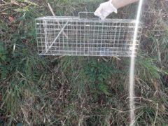 The cat was found in a wire trap (Scottish SPCA/PA)