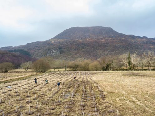 Hafod Garegog where trees which like wet conditions are being planted to help curb flooding (Paul Harris/National Trust/PA)
