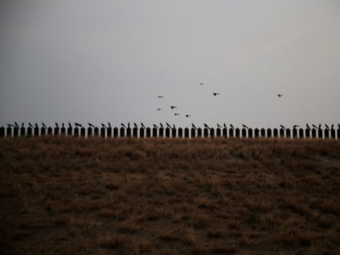 Birds perch on the top of the US-Mexico border fence in Penitas, Texas (Dario Lopez-Mills/AP)